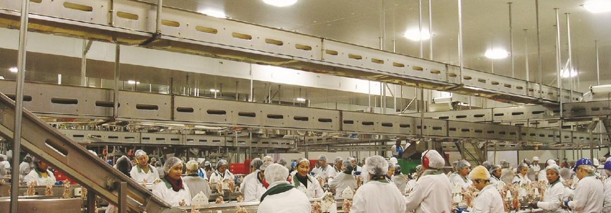 Chicken Processing Conveyor